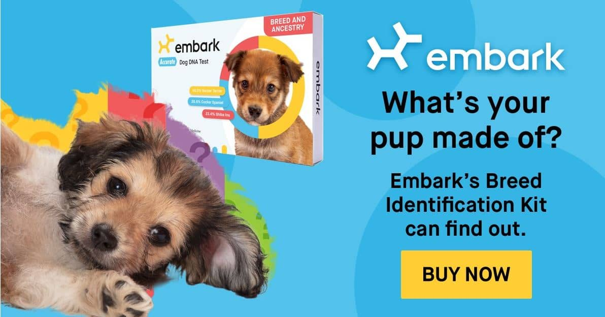 Embark buy now link