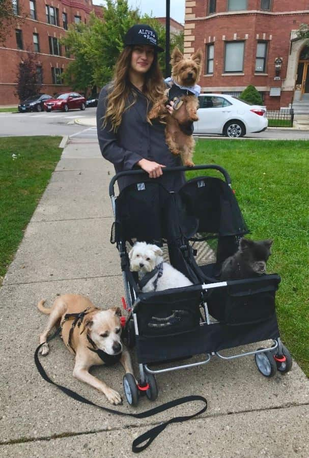 Walking with foster dogs