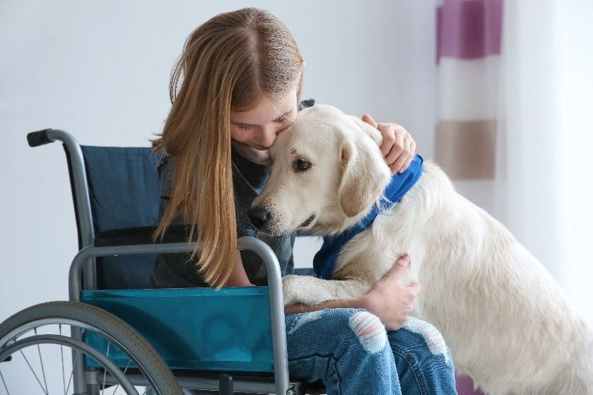 Guide dog and a girl in a wheel chair hugging