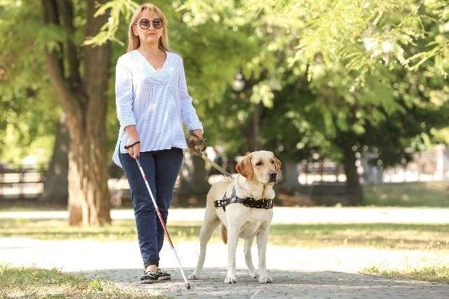 Guide dog and blind lady at park