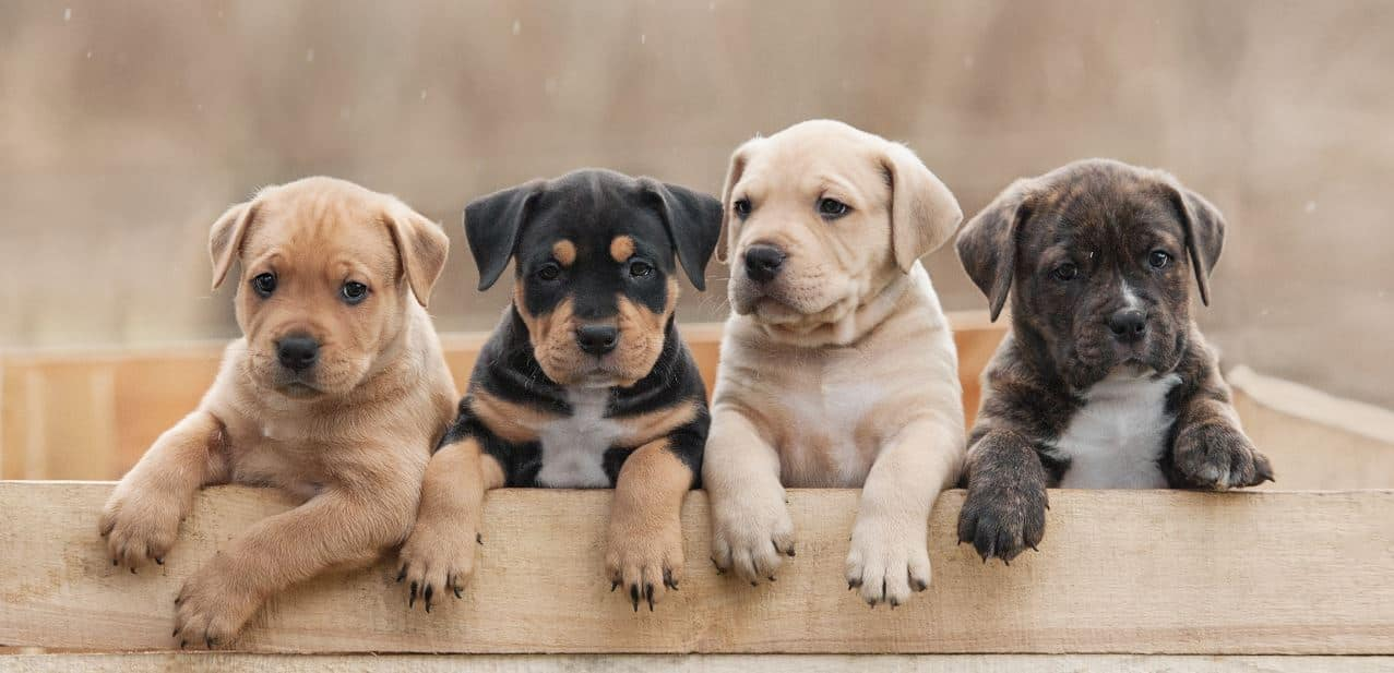 Different breeds of puppies in a wooden box