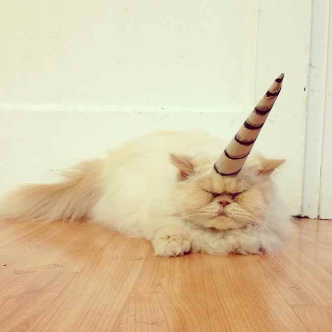 Sleepy cat wearing Caticorn costume