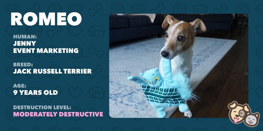 Romeo the dog info