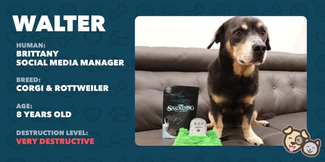 Walter the dog info