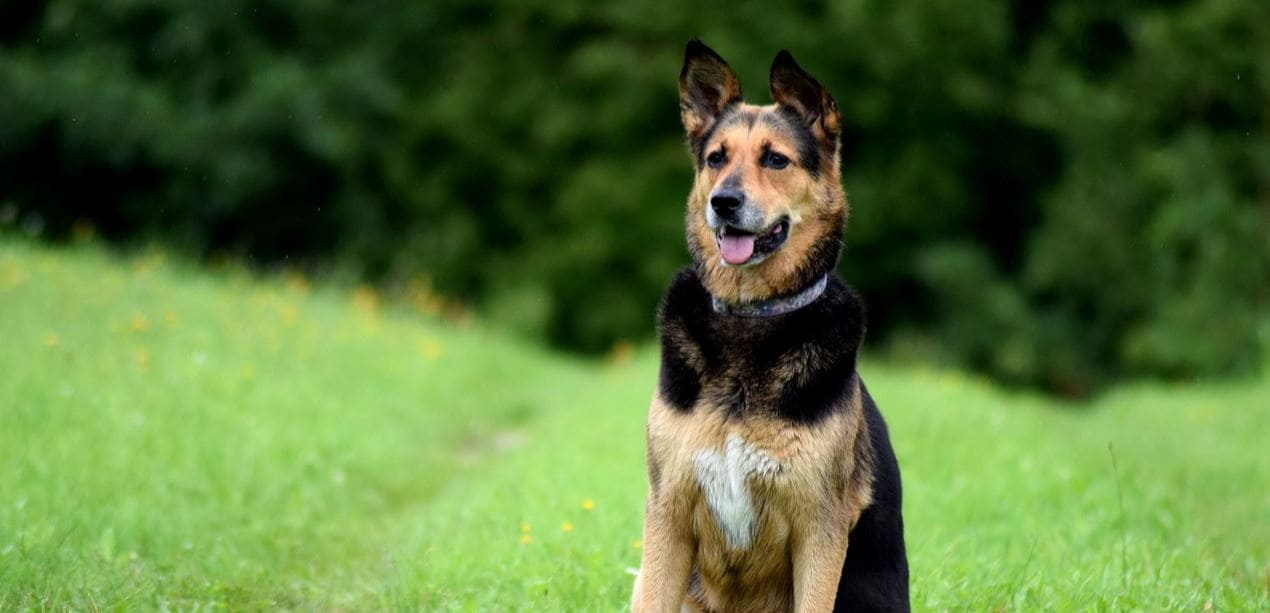 Dog body language to look for