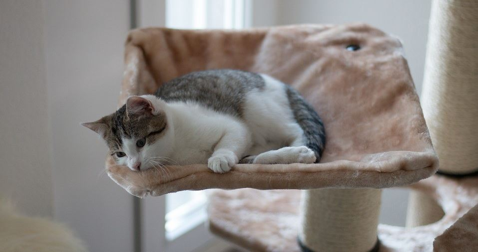 Cat lies down on the cat sofa