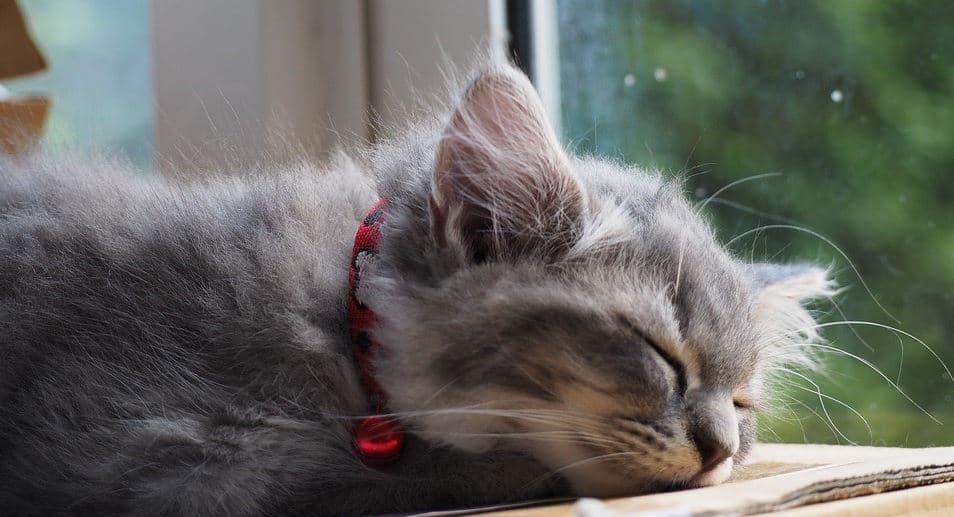 Cat taking sunbath