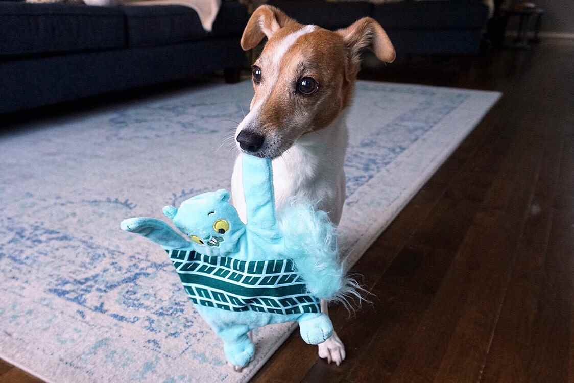 Review of BarkBox Plush Toys