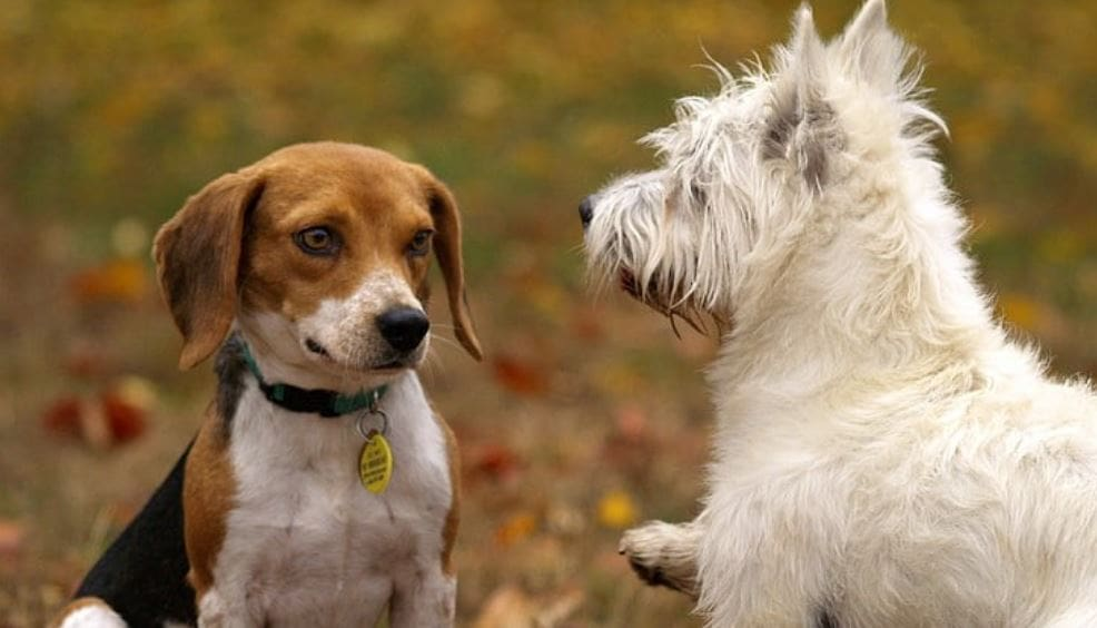 Introducing dogs to each other at the park