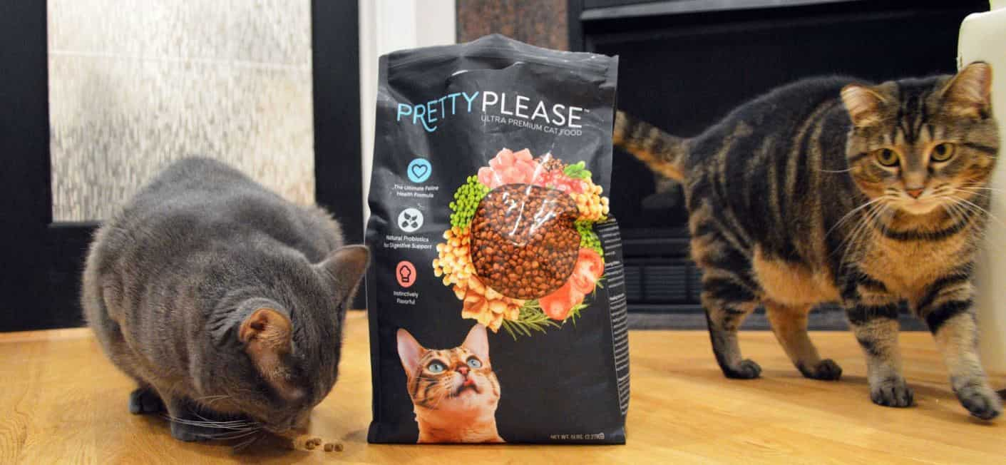 Cat feeds PrettyPlease