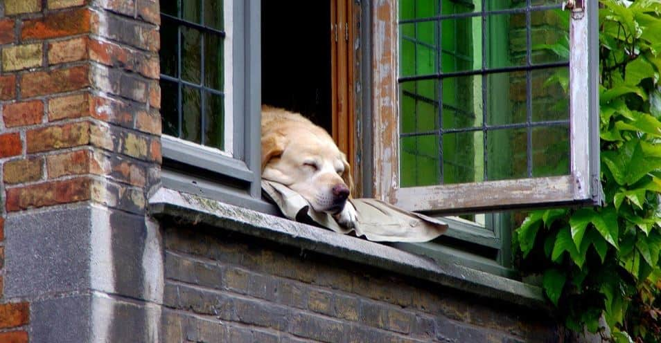 Dog sleeping on window