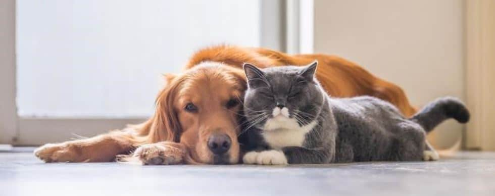 Dog and cat lies next each other