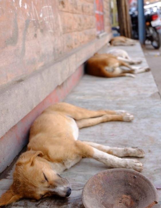 Homeless dogs sleep on the street