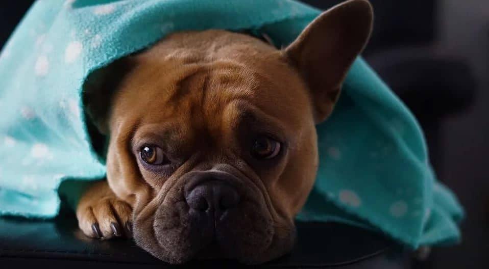 Cuddly dog in blanket