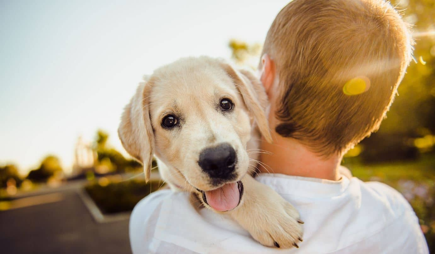 Boy holds a dog