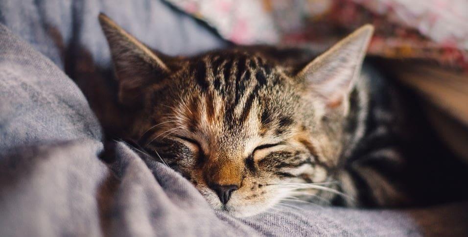 Kitty taking a nap