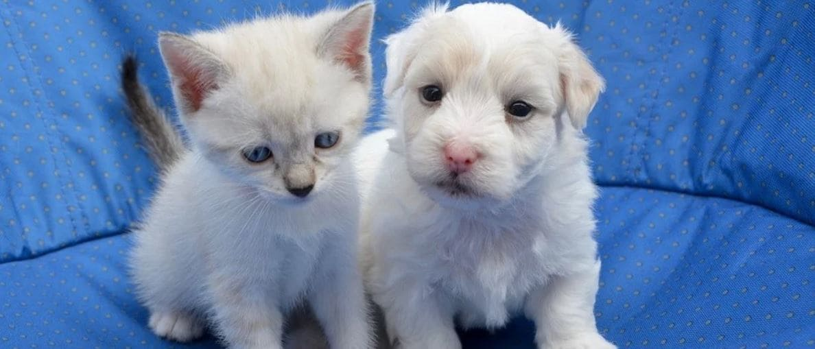 Kitty and puppy header
