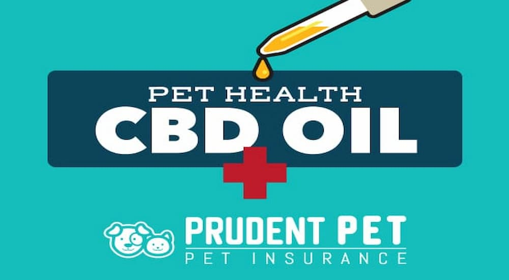 CBD oil for pet health banner from Prudent Pet