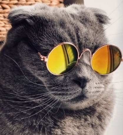 Cat wearing sun glasses