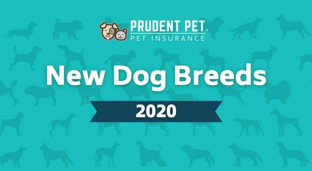 New dog breeds different dog breeds in background