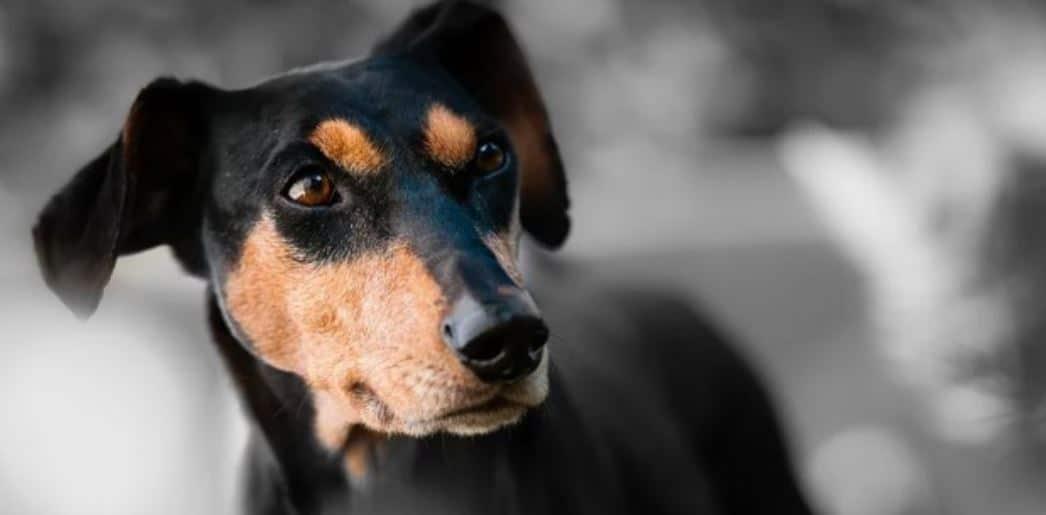Dog snout closeup