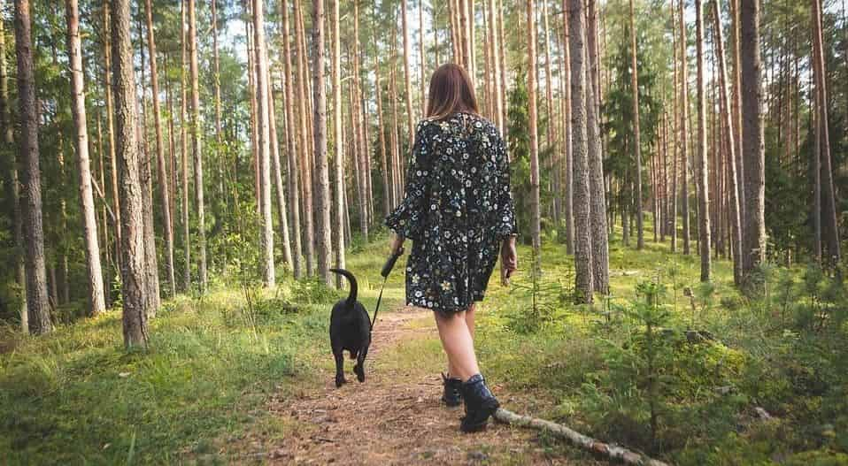 Woman walks with her dog in woods