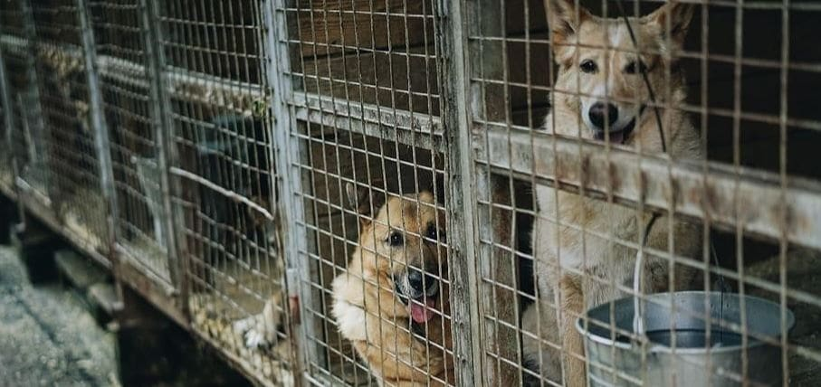 Two dogs in puppy mills