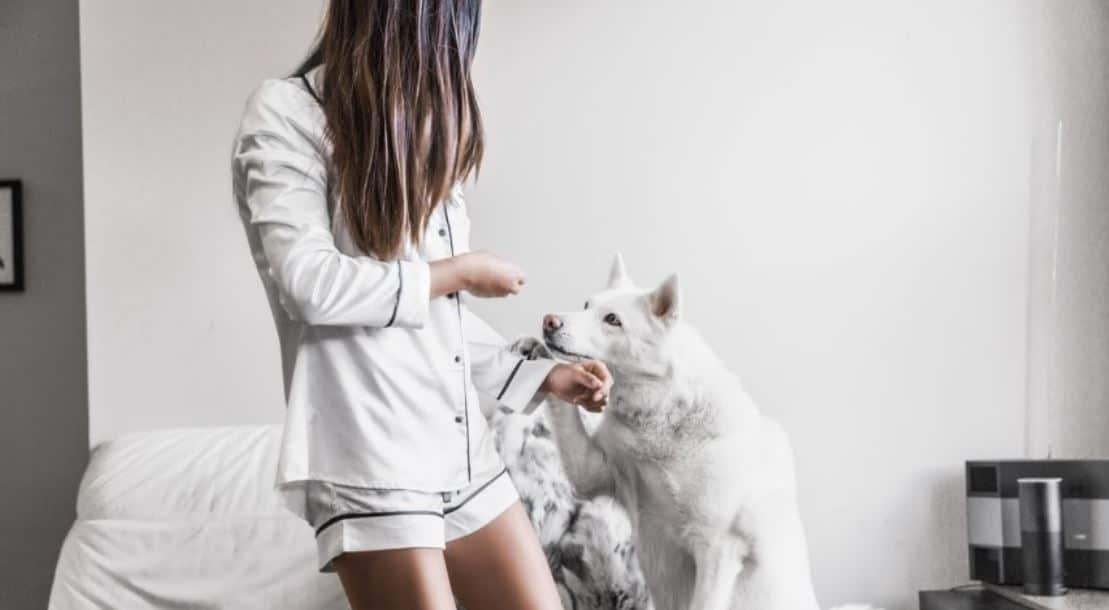 White dog with a girl in pjs on bed