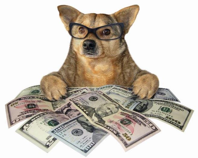 Dog wearing glasses with US dollars
