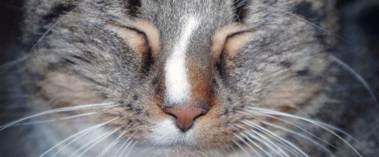 Close up of cats eyes