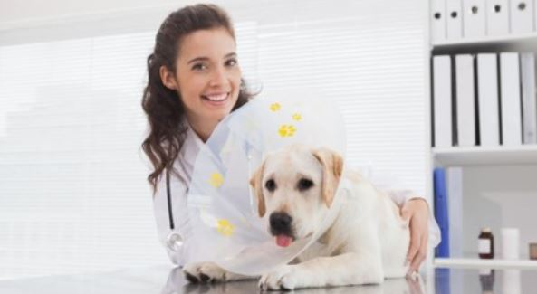 Female vet and dog with cone in the clinic