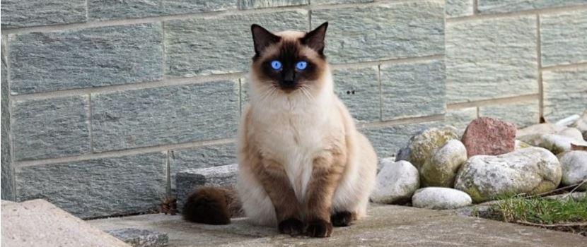 Blue eyed kitten on the street