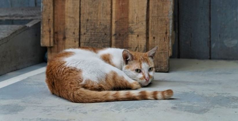 Brown and white colored cat outdoors