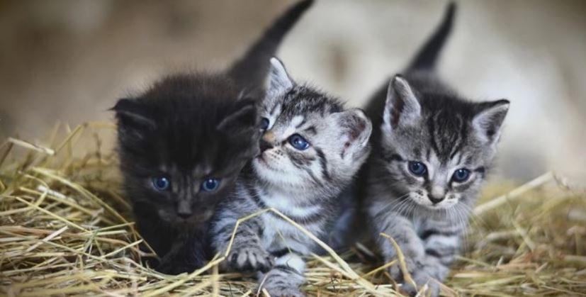 Three new born kittens