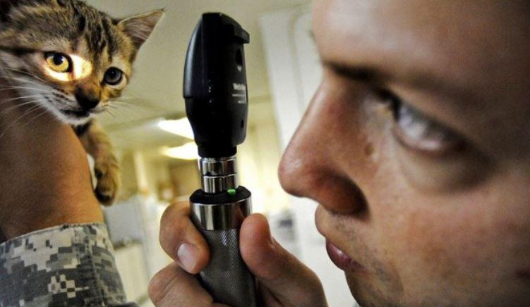 Female vet checking cat's eye condition