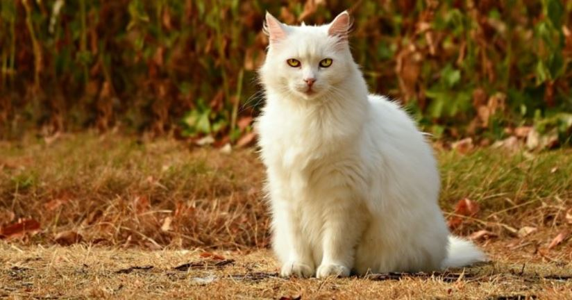 White cat sits on wood
