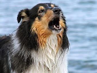 Dog barks at lake