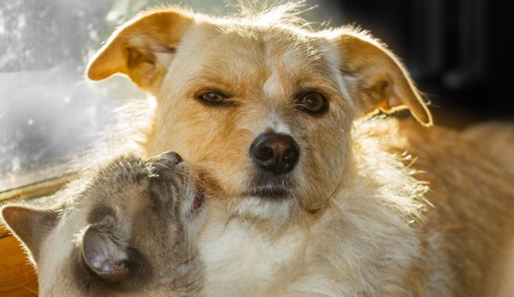 Cat licks dog's face