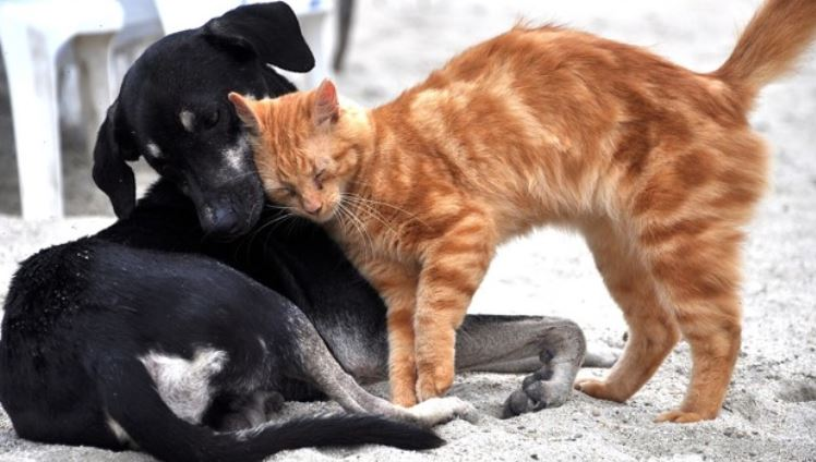 Cat and dog at the beach