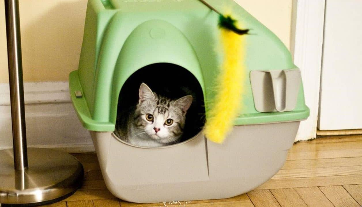 Kitty in green litter box