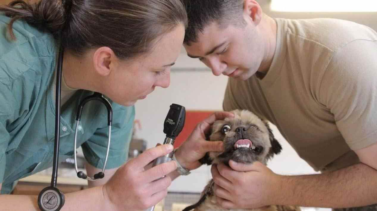 Vet and vet tech examining a small brown dog
