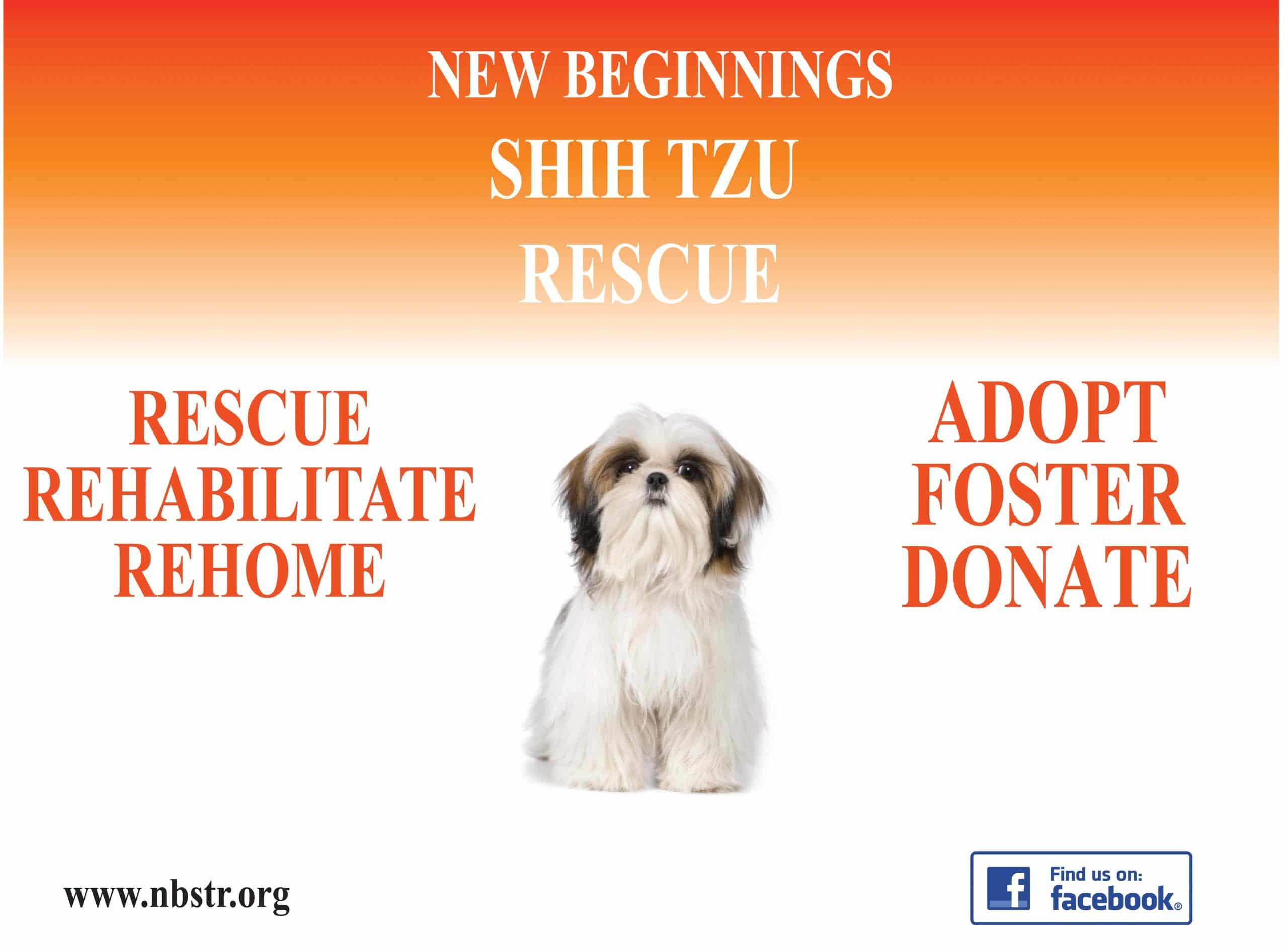 New Beginnings Shih Tzu Rescue