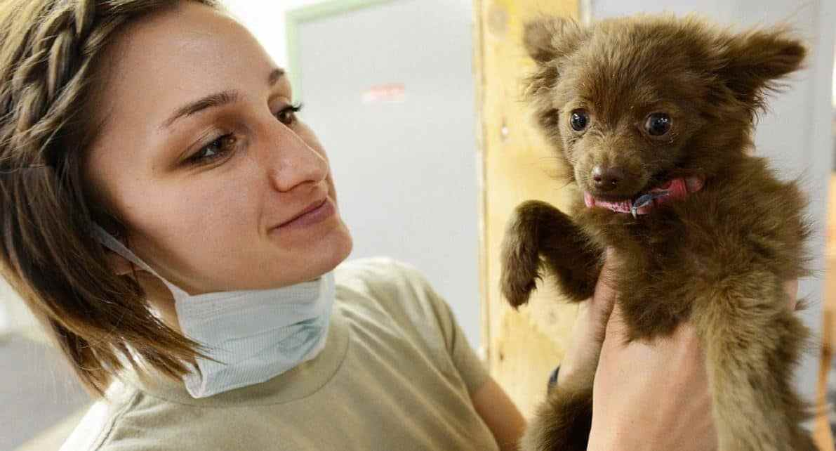 Vet tech holding up a brown puppy