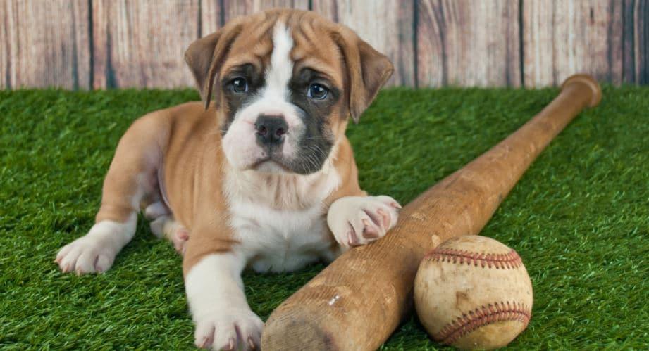 Playing baseball with dog