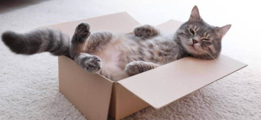 Cat puts body in cardboard box