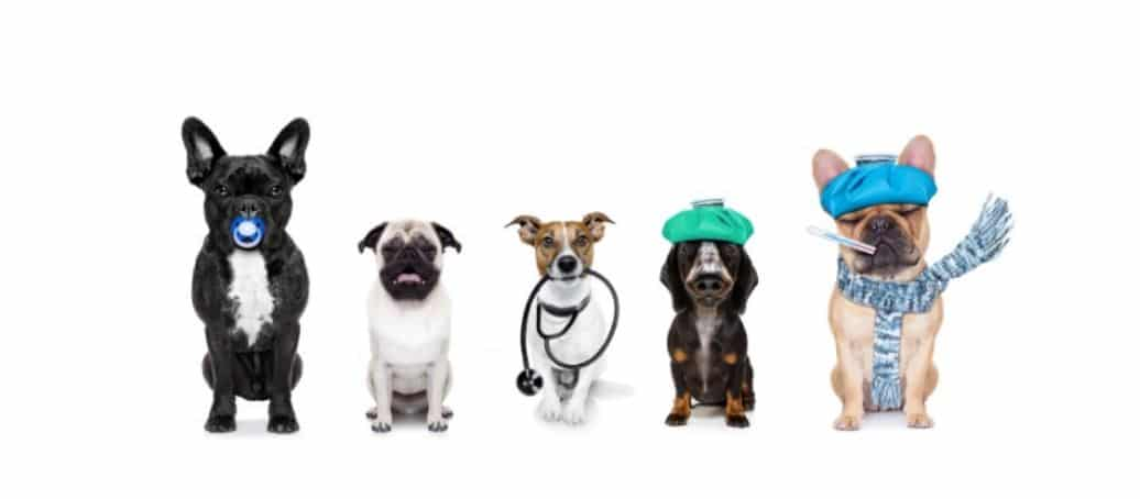 Dogs wearing medical costumes in line