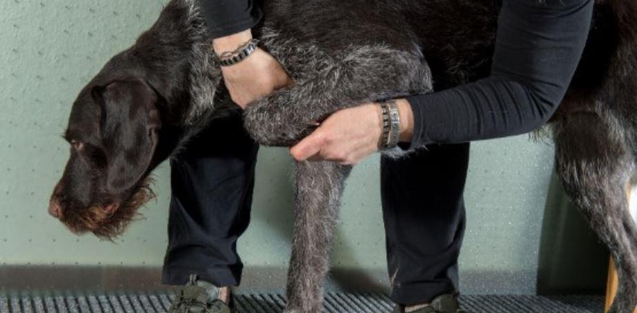 Parent checks lack dog's leg