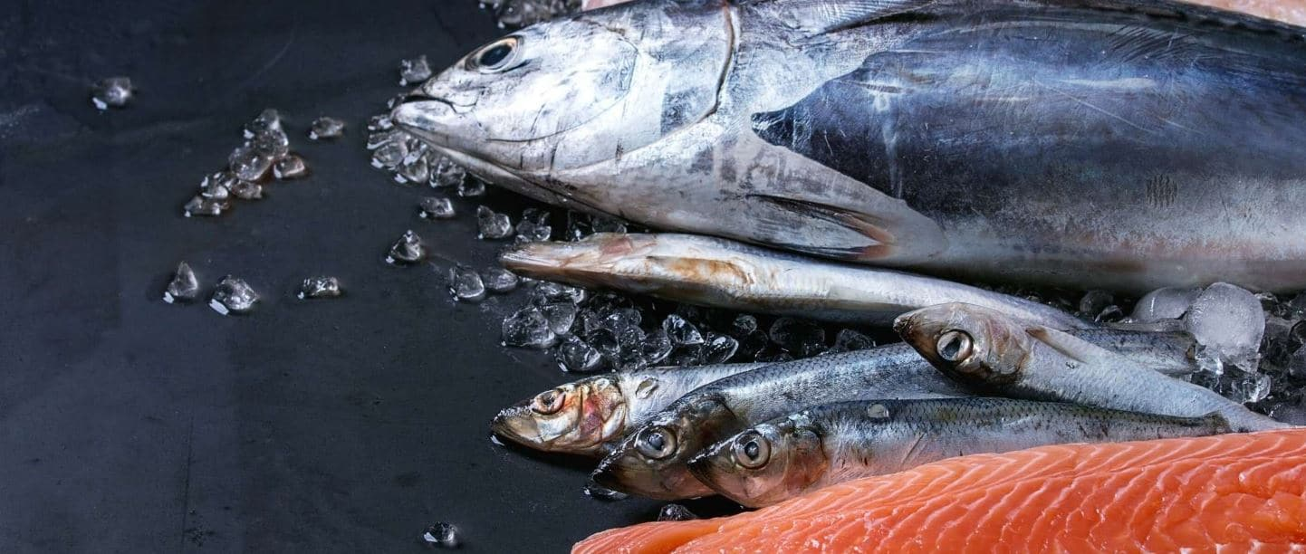 Fresh fish in a raw