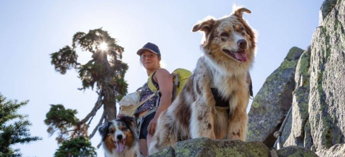 Hiking and camping with dogs in the summer