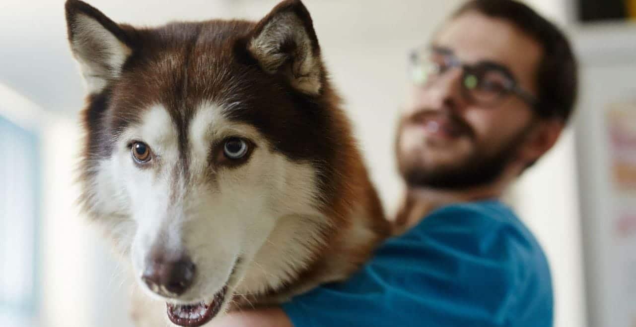 Husky and its parent closeup